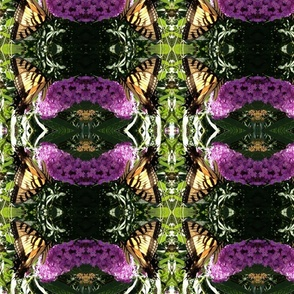 Rrrbutterfly2__2013_crop_shop_thumb