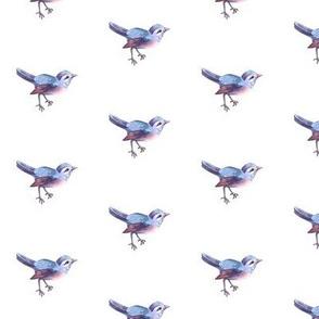 Song Bird, Blue on White