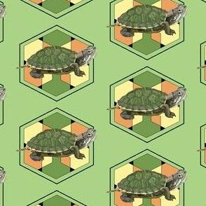 Danny's Turtle