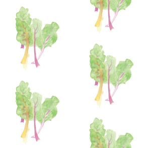 Swiss Chard Bunch - yellow and pink