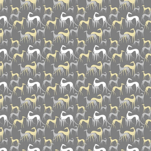sighthounds grey yellow SMALL
