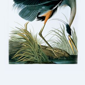 04-great-blue-heron