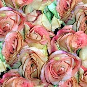 A Dozen Dozen Roses ~ New Romance
