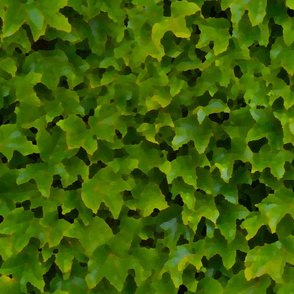 Painted wall of ivy leaves