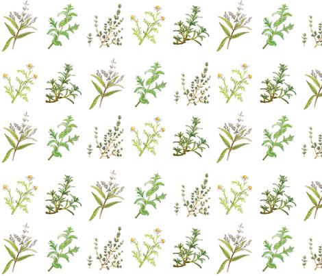 HERB_GARDEN_150dpi fabric by studio_lipp on Spoonflower - custom fabric