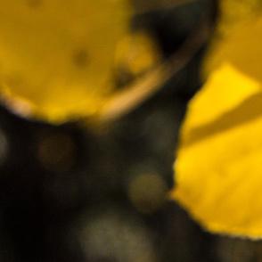 Aspen Leaves, 54x72