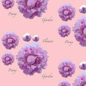 peony-pink