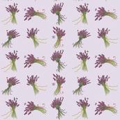 Memories_of_Sequim_lavender