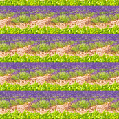 Rrlavender_fields_ed_shop_thumb