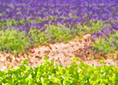 lavender_fields-ed