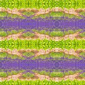 Rrrlavender_fields_ed_shop_thumb