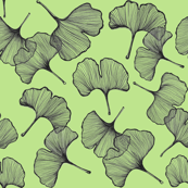 Ginkgo in Lime