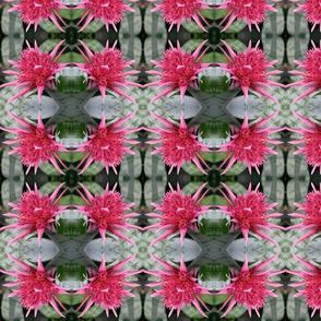 Pink Bromeliad 2214