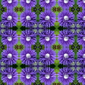 Purple Clematis 7731