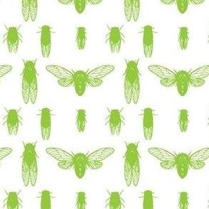Lime cicadas