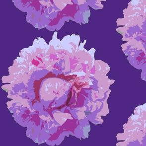 peony big--dark lilac