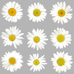 daisy dots on light grey