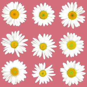 daisy dots on peach-pink