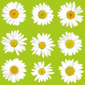 daisy dots on lime green
