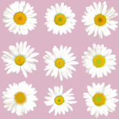 daisy dots on pale pink-grey