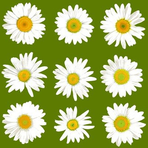 daisy dots on grass green