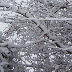 Iced_Branches