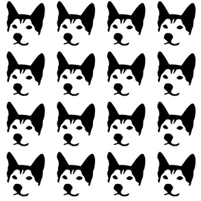 dog husky small in a row