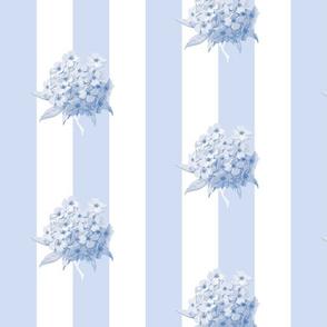 Hortensia Summer Stripe