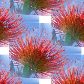 Hawaiian flower screen