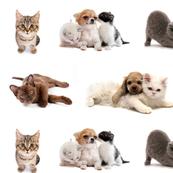 kittens in colour