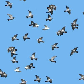 Infinite Pigeons