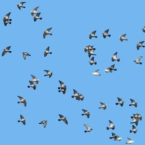 Infinite Pigeons 2