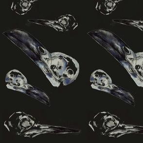 black_background_birds1