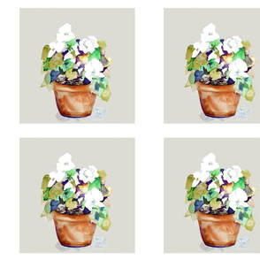 """Petunia 8"""" blocks"""