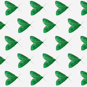 Moth in green and white