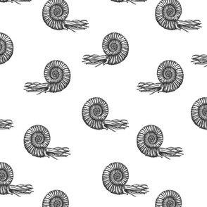 ammonite white and black 50