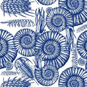 ammonite blue