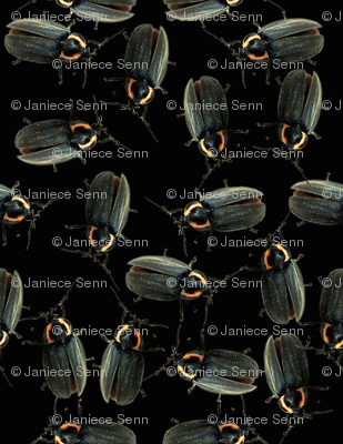 Fireflies Unite