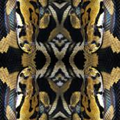 Viper
