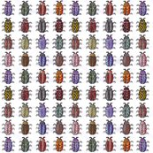 Rwatercolorbeetles1_shop_thumb