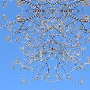 Paulownia Trees 02