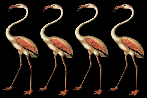 FLAMINGO ROW LEFT