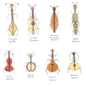stringed beetles