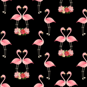 Flamingos and black