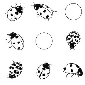 Ladybug Black and White