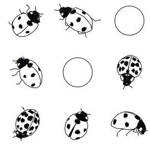 Ladybug Black and White