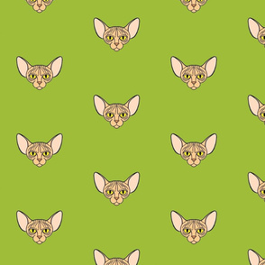 Sphynx Cat with Green Background