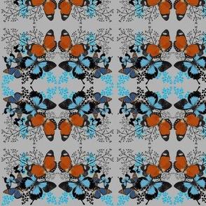 wild butterflies-ed