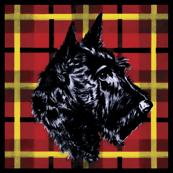 Black Scottish Terrier on plaid