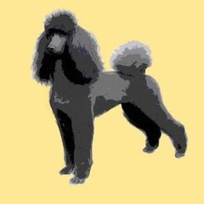 black poodle ch